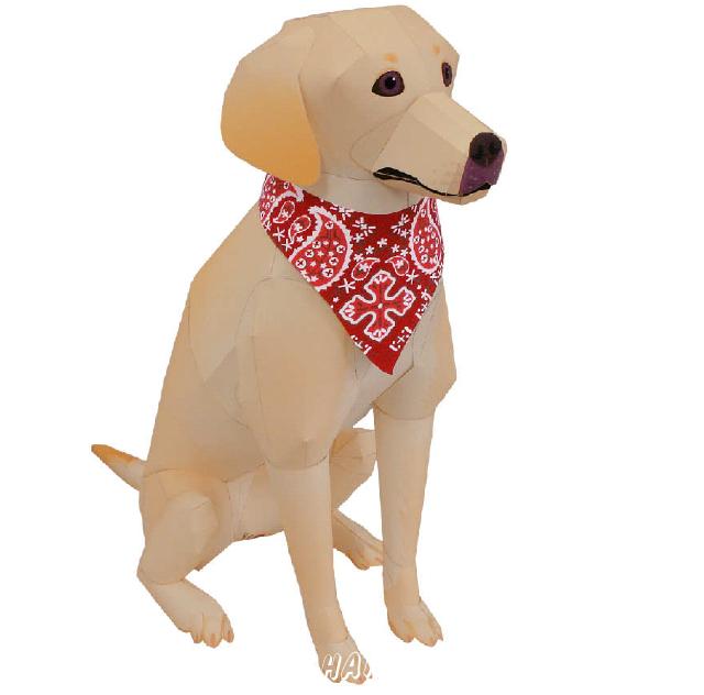 Labrador Retriever(dog) Yellow, Black