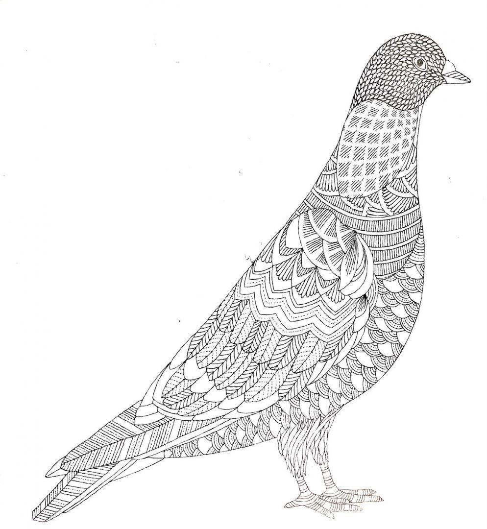 раскраска антистресс птицы