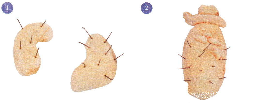 Dough roll two fat sausages. Bend them make thorn wire - a hands-branches.