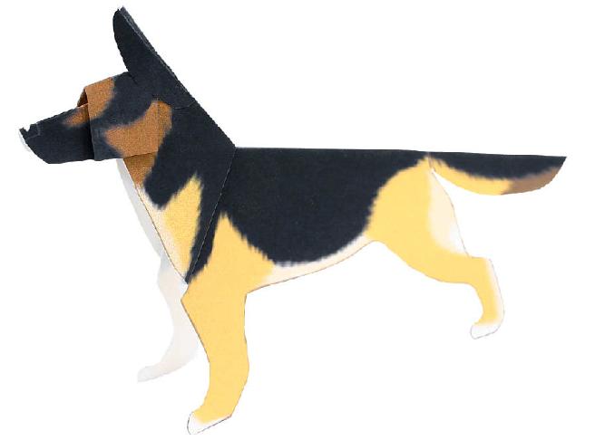 German shepherd(dog)