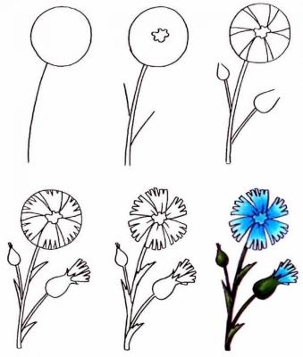 Пошаговые рисунки цветов, животных для девочек и мальчиков
