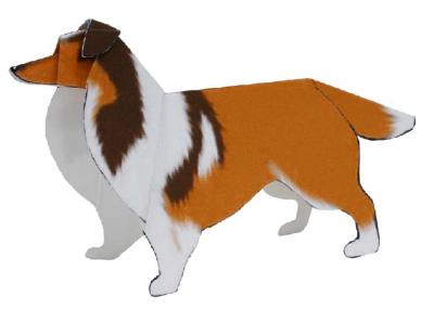 Shetland Sheepdog(dog)