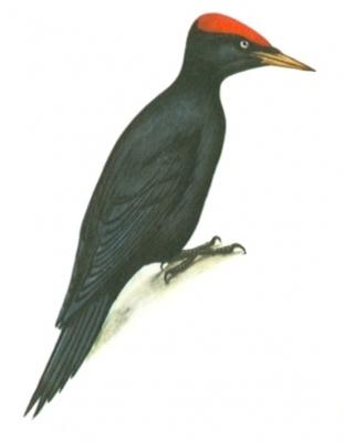папрекрафт птицы